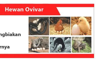 Hewan-Ovivar-definisi-karakteristik-reproduksi-contoh